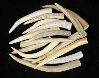 """Multipack 4-6"""" Antler Tips Real Deer Bone Taxidermy Pendant Necklace Jewelry tines WHOLE"""