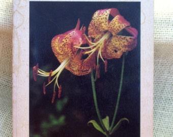 Wildflower Book, Vintage Nature Guide, Wild Flowers of the Big Thicket, 1970's Field Guide, Geyata Ajilvsgi, Texas A&M University Press