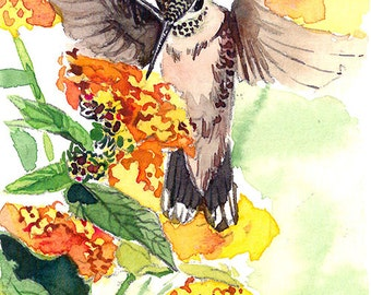 ACEO Limited Edition 1/25 - Hummingbird hovering, Hummingbird art print of an ACEO original watercolor by me, Gift idea for bird lovers