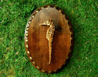 Wood Portrait Wall Curio with Brass Tacks and Seahorse
