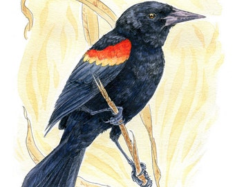"Red-Winged Blackbird- 5""x7"" Print of Original Ink Watercolor Bird Painting"