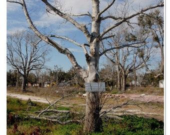 Defiant Tree Photo - Gulf Coast Print - Southern Photography - Storm Tree Print - Nature Photography