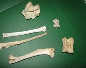 Naturally Weathered Real Animal Bones. Lot includes 3 long bones and 3 vertebrae bones. Great for crafts or to paint or carve or for decor.