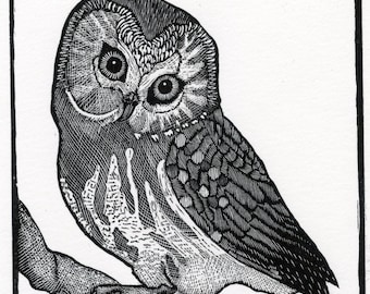Saw-whet Owl - Limited Edition Print