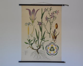 SALE 10% OFF Vintage Botanical School Chart.  Blue bell. Bluebell. Bellflower (Campanula patula). Pull Down School Poster. Austria. 0974
