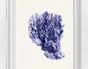 Blue coral no.04 - sea life print- Antique sealife Illustration - Marine  sea life illustration A4 print SPC062