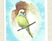 Parakeet, favorite pet bird, green and on his perch, by River Spring, handmade card, greeting card, vintage antique art, sweet budgie