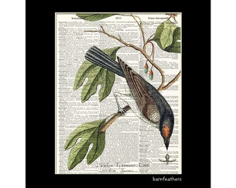 Vintage Illustration Kingbird Song Bird Dictionary Art Print Book Page Art No. P454