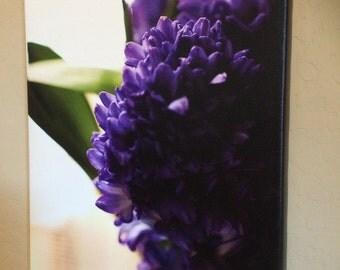Hyacinth 16x20 canvas print
