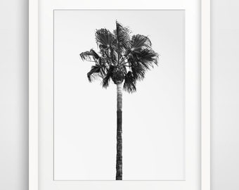Palm Tree Photo, Black and White Photography, Beach Photography, California Art, Black and White Wall Art, Printable Wall Art, Wall Decor