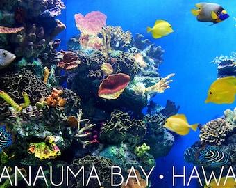 Hanauma Bay, Hawai'i - Fish and Coral 1 (Art Prints available in multiple sizes)