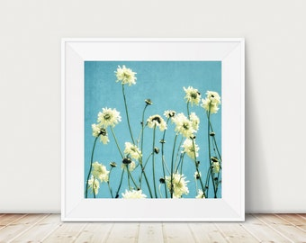 Nature photography, flowers, sky, wildflowers, summer photograph, cream, teal, colour, shabby chic decor, fine art photograph - Scabious