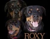 Pet Photo Collage Dog - C...