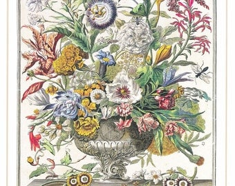 September vintage botanical art print Winterthurs 12 months of flowers Robert Furber wedding anniversary newborn baby gift idea 7.5 x 10 in