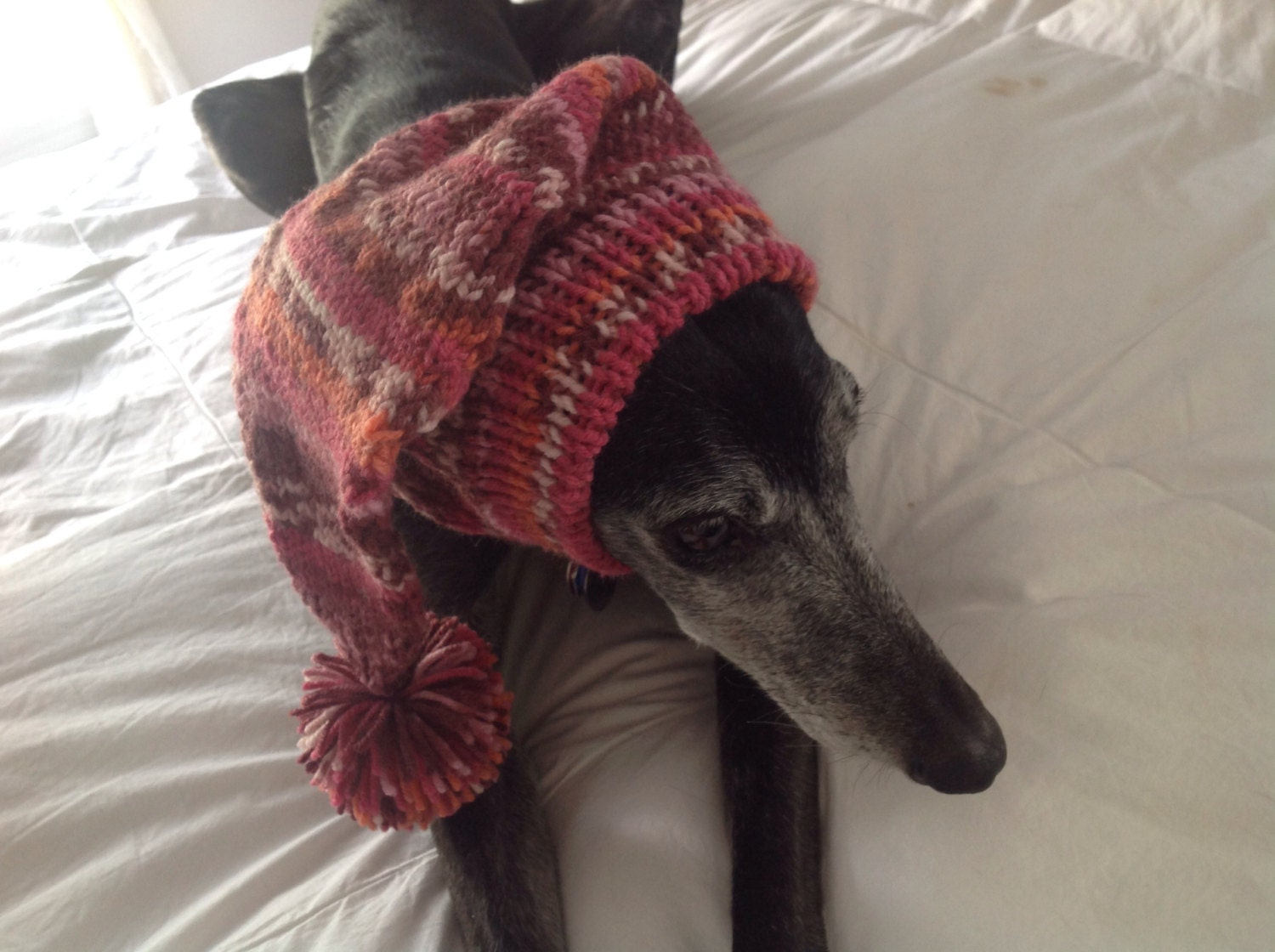 Pointed hat with snood for greyhound fair isle pattern rose garden gallery photo gallery photo gallery photo gallery photo gallery photo bankloansurffo Images