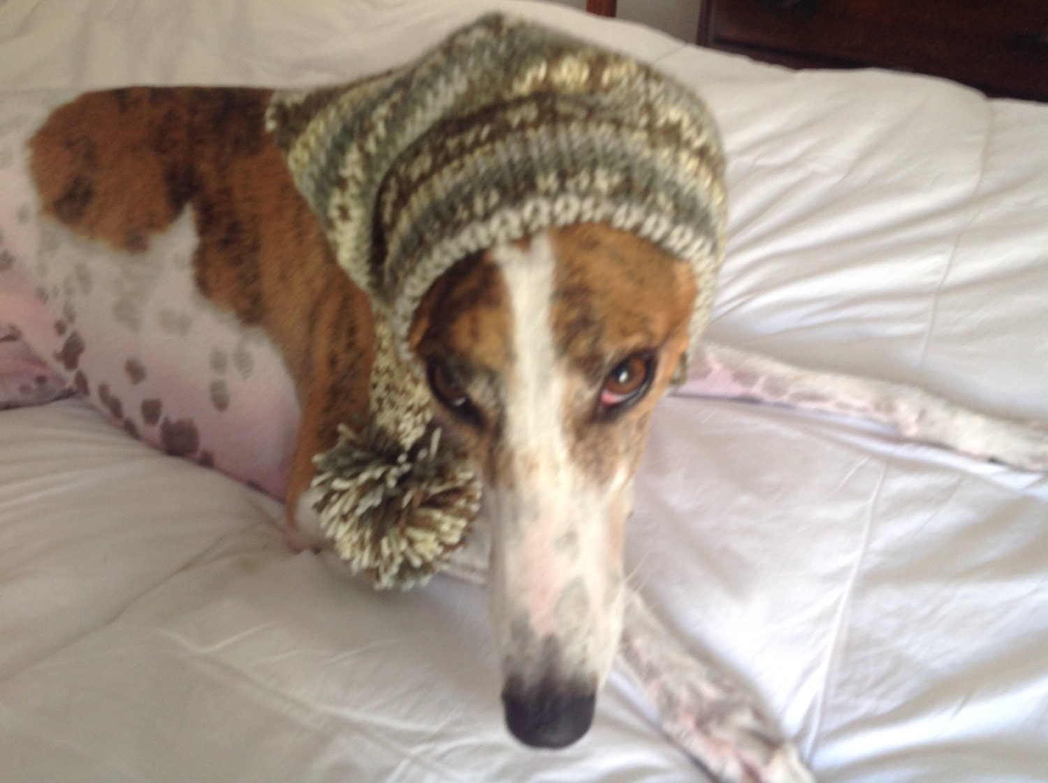 Pointed hat with snood for greyhound or other large sighthound gallery photo gallery photo gallery photo bankloansurffo Images