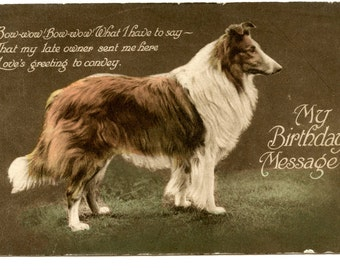 1900s Rough Collie Dog Postcard Antique Vintage Victorian Edwardian
