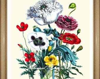 "Poppies Print #7. Botanical Print. Flower Prints. Poppy. Flower Wall Art. 8x10"""