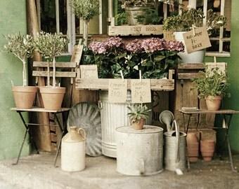 Flower Photography, London Market, Europe, Pink, Sage Green, Fine Art Print, Home Decor, Kitchen, Wall art, girls room, gifts for gardeners