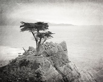 Lone Cypress Tree, Black and White Photography, Landscape Photo, Pacific Coast, California, Monterey, Nature, Fine Art Print, Home Decor