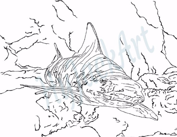 printable tiger shark coloring pages - photo#11