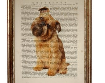 Brussels Griffon Dog, beautiful Art Print on Upcycled Dictionary Book page 8'' x 10'' inches