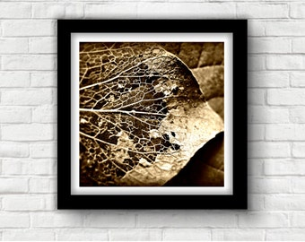 Wall Art Leaf Macro Photograph, Abstract Print 8x8 Square Format