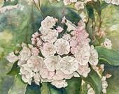 Mountain Laurel watercolor print