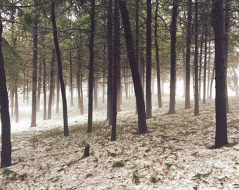Nature Photography - Tree Photography - Winter Photography - Forest Photography - Trees - Fog - Snow