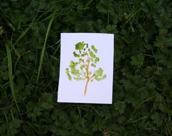 Watercolour aspen tree