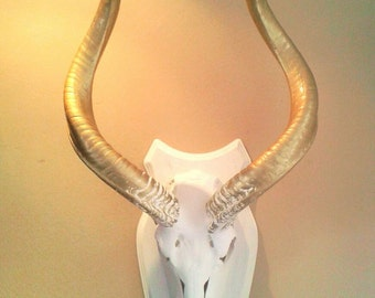 Kudu skull paint in white and gold typical African decor wall decoration wild animals