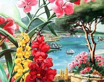 Candytuft, Snap Dragon, Oleander, Italian Stone Pine - 1957 Vintage Botanical Print - Book Page Flower Print - 10 x 7