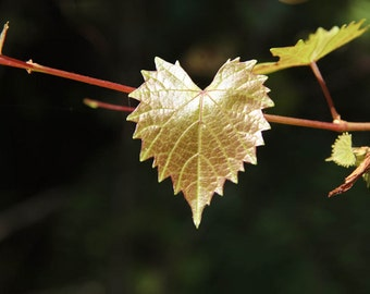 Leaf of Love Fine Art Print