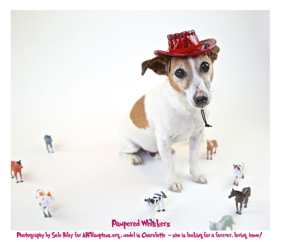 """Cowboy hat for small cats and dogs 10-12"""" collar size (plain - no letters)"""