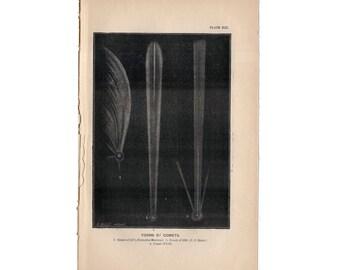 1872 FORMS OF COMETS lithograph original antique celestial astronomy print