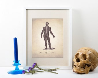 Central Nervous System Art Print, Human Anatomy Art Print, Human Anatomy Nervous System, Medical Illustration Print, Human Anatomy Prints