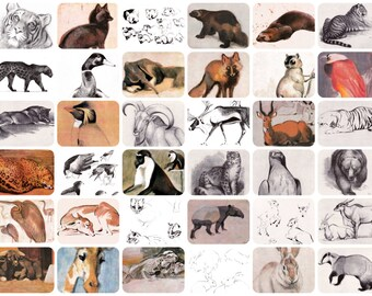 Animals, Drawings by V. Vatagin. Set of 36 Vintage Prints, Postcards -- 1978. Fine Arts Publ., Moscow