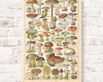 Mushroom poster | Etsy