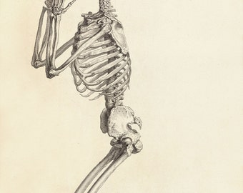 "William Cheselden Human Anatomy Print : ""Side View of a Praying Skeleton"" (Osteographia, 1733) - Giclee Fine Art Reproduction"