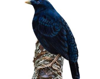 Bird Print - Bird Art - Bowerbird Art