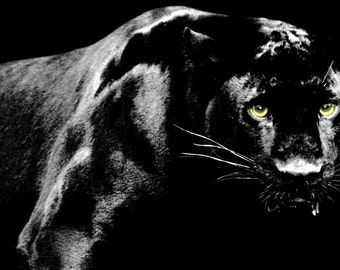 Black Panther Poster, Jaguar, Cougar, Leopard, Big Cat, Predator