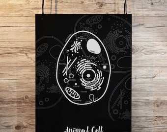 Animal Cell - black and white print, Little Biologist Set, back to school