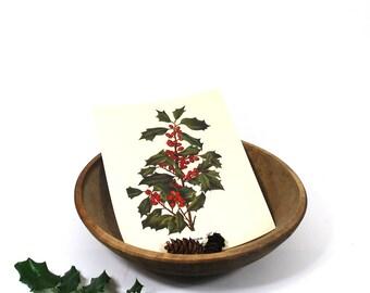 Vintage Botanical - American Holly Print