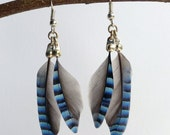 Jay Wing Feather Dangle Earrings, blue striped feather earrings, jewellery for her