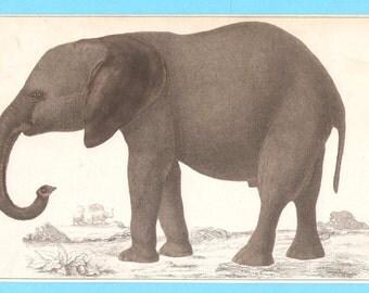 Antique Elephant illustration