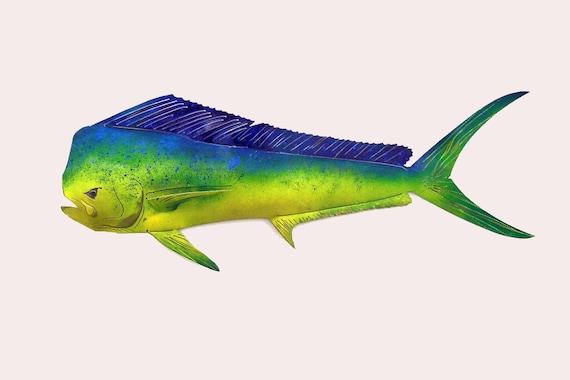 "36"" Dolphin/Mahi Mahi in Stainless Steel"