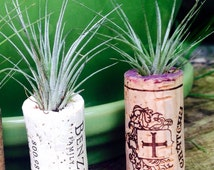 12 Wine Cork & Air Plant Magnets  (Tillandsia Plant Terrarium Favor Set)