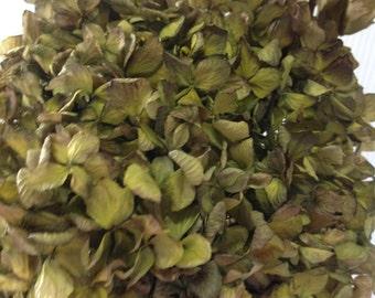 3 Stems Large Antique Green Hydrangea Dried Flower Stems