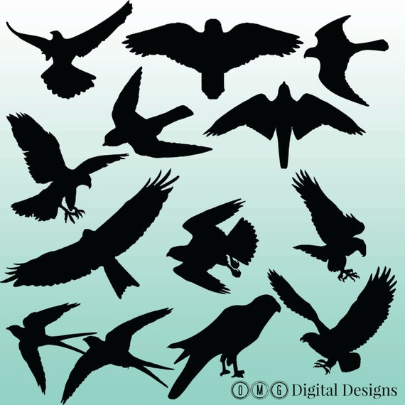 flying falcon clip art - 570×570
