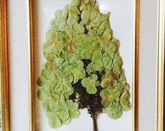 Pressed oak leaf hydrangea
